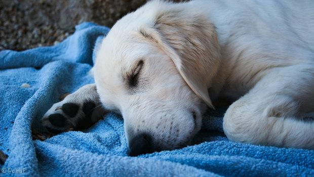 Do+dogs+dream%3F